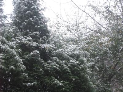 sneeuw8.jpg