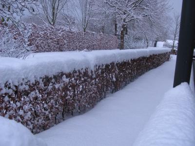 sneeuw9.jpg