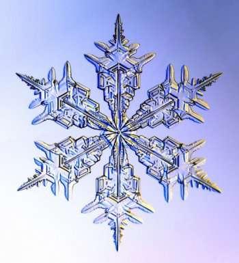 sneeuwvorm.jpg