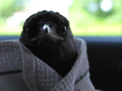 vogeltje1.jpg
